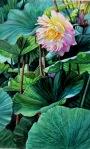 "Ardythe Jolliff--""Lonely Lotus"""