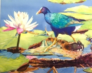 "MORRIS WILLIAM C. ""High Stepping"" Purple Gallinule, Board of Directors Award"