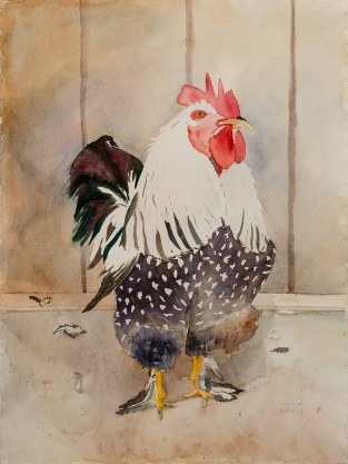 BARBERO ANNE Rooster Burke